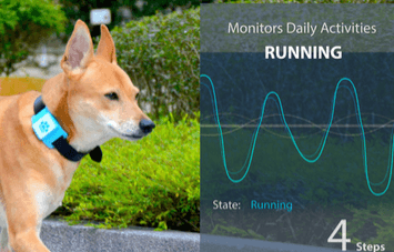 Lucky Tag: Smart Activity Tracker + Locator for Dogs