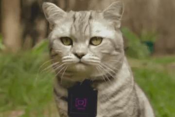 WHISKAS CATSTACAM: Wearable for Cats