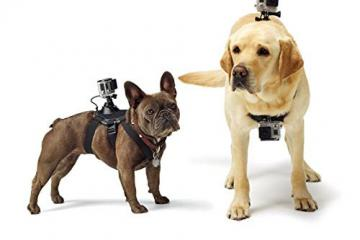 SopiGuard Fetch Chest Strap GoPro Mount for Dogs