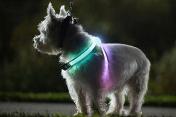 LightHound Visibility Vest for Dogs