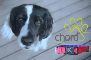 Chord Collar: Smart Pet Collar / Activity Tracker