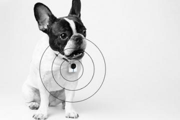 Gopet Wearable: See What Your Pet Sees