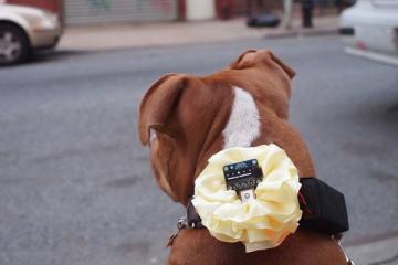 DIY: GPS Dog Collar