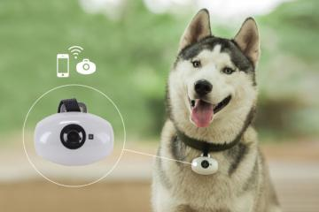 PawsCam Wearable Camera for Dogs