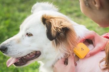 Findster Duo GPS Pet Tracker