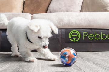 Pebby Robotic Pet Ball with Wearable Tracker