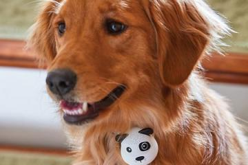 G.O.A.T Bluetooth Speaker for Dogs
