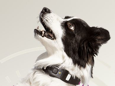 VOYCE Dog Health & Fitness Collar