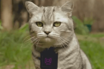 WHISKAS CATSTACAM: Wearable for Cats