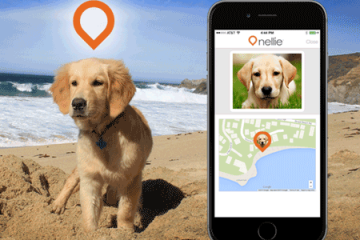 Where's Nellie: Wearable for Your Dog