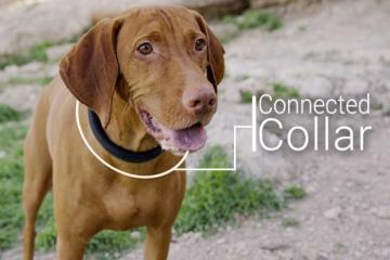 Dogtelligent's Connected Collar for Pet Tracking & Health