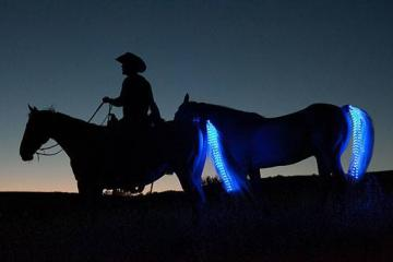 Tail Lights Safety for Your Horses
