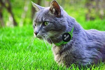 Pawscout Wearable for Dogs & Cats