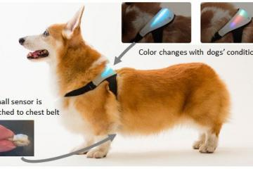 INUPATHY Wearable: Smart Mental Visualizer for Dogs