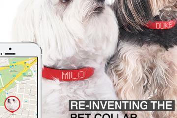 KYON: Smart Dog Collar with 3D GPS, Sensors, LED Display