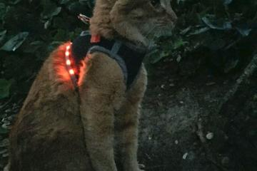 DIY: LED Cat Harness