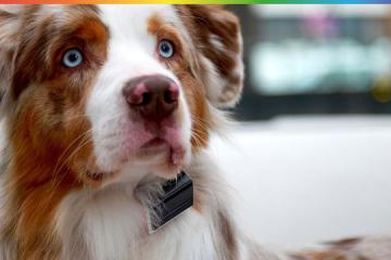Jagger & Lewis Makes Your Dog Collar Smart