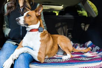 Whistle 3 GPS Pet Location & Activity Tracker