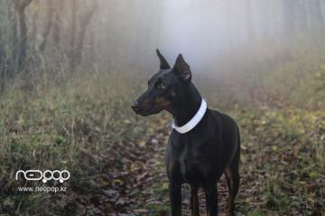 PetBand: Smart LED Neck Collar for Dogs