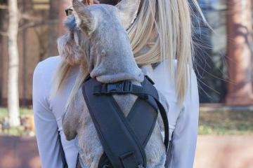 Ruffit Dog Carrier: Wear Your Dog On Your Back