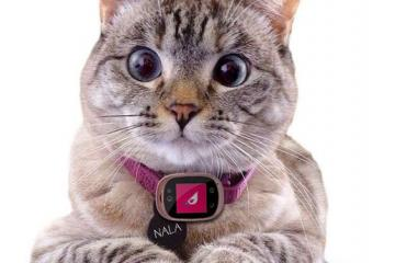 Trackums Smartphone for Your Pets