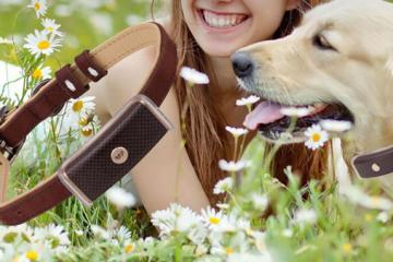 WagTag Smart Wearable for Pets