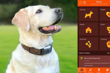 Waggit Smart Dog Collar with Health & Location Tracking