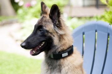 Wagz Explore Smart Dog Collar with AI