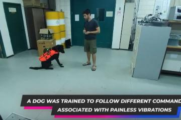 Remote Controlled Haptic Vest for Dogs Developed
